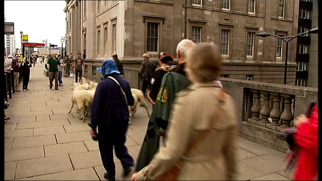master of the worshipful company of woolmen drives sheep across london bridge england london ext sheep unloaded from trailer to be driven over london... - makeshift stock videos & royalty-free footage