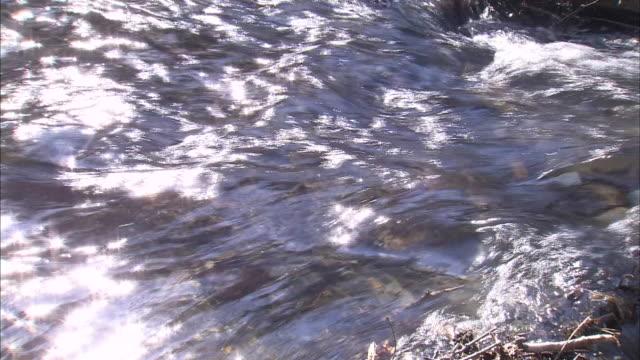 vídeos de stock, filmes e b-roll de masu-salmon in mountain stream - neve derretida