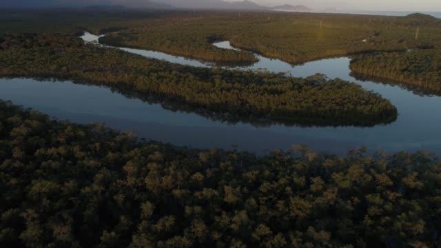 vídeos de stock, filmes e b-roll de mata atlântica - a mata atlântica em boraceia, são paulo, brasil - pântano