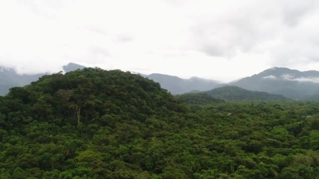 mata atlantica - atlantic forest in brazil - tropical rainforest stock videos & royalty-free footage