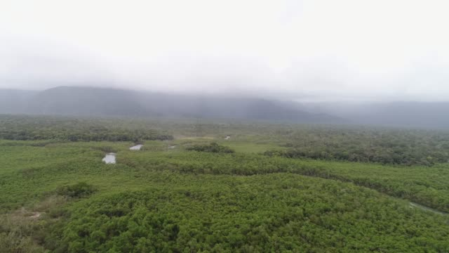 mata atlantica - atlantic forest in brazil - manaus stock videos and b-roll footage