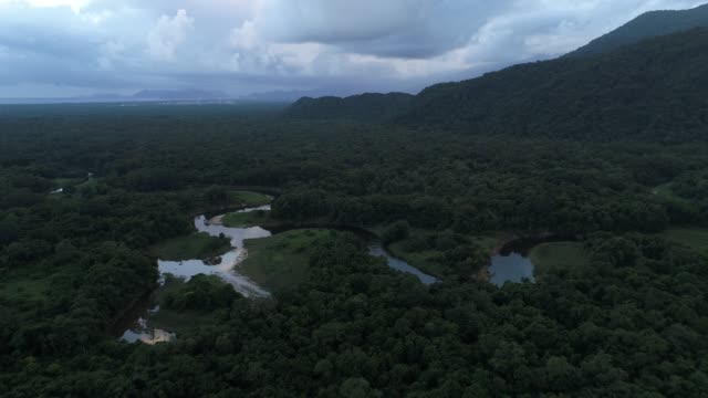 mata atlantica - atlantic forest in brazil - zona arborea video stock e b–roll