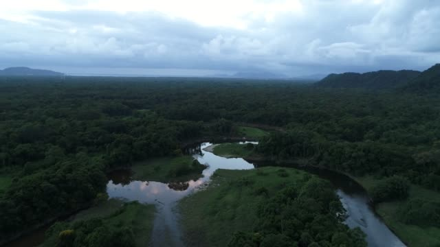 mata atlantica - atlantic forest in brazil - amazonas state brazil stock videos and b-roll footage