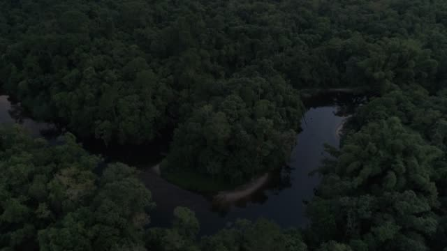 mata atlantica - atlantic forest in brazil - roraima state stock videos and b-roll footage