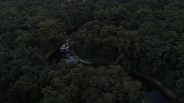 mata atlantica - atlantic forest in brazil - belém brazil stock videos and b-roll footage