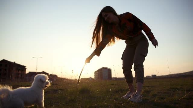 Matese Hund versucht, den Stock zu fangen und stolz tragen, nachdem er erfolgreich ist