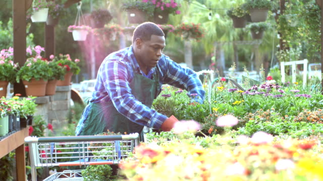 mature african-american man working in plant nursery - greenhouse stock videos & royalty-free footage
