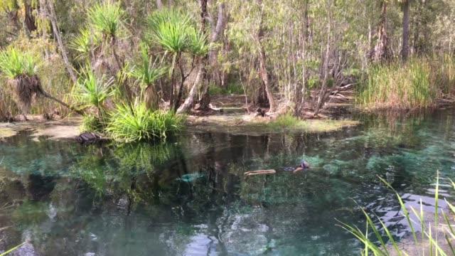 mature australian woman swimming in mataranka bitter springs northern territory australia - spring flowing water stock videos & royalty-free footage