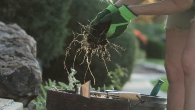 vídeos y material grabado en eventos de stock de rubia madura jardinería femenina plantando flores en un día soleado de primavera - guantes de protección