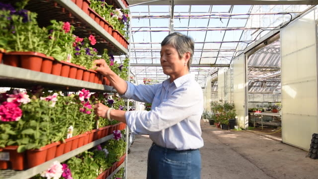 mature chinese greenhouse business owner. - garden centre stock videos & royalty-free footage