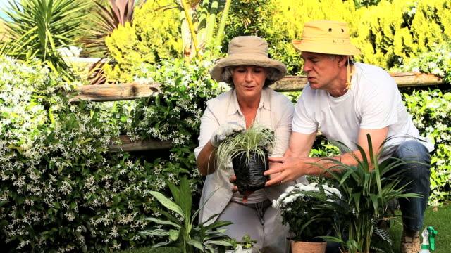 vidéos et rushes de mature couple gardening / cape town, western cape, south africa - couvre chef