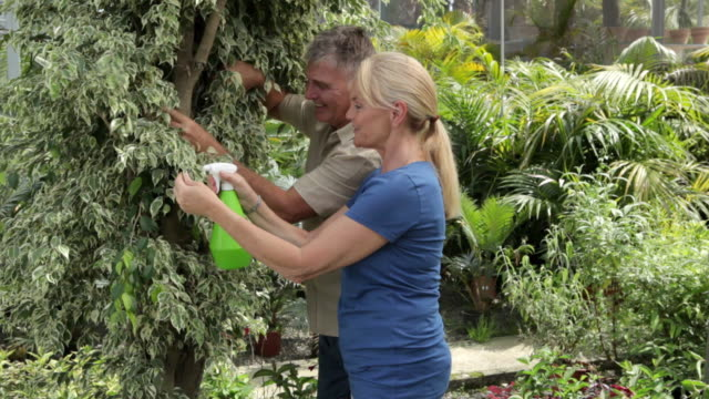 mature couple gardening, spraying leaves of tree with water - haar nach hinten stock-videos und b-roll-filmmaterial