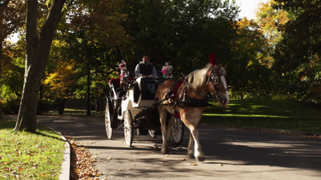 WS Mature couple in horse drawn carriage in Central Park / New York City, New York State, USA