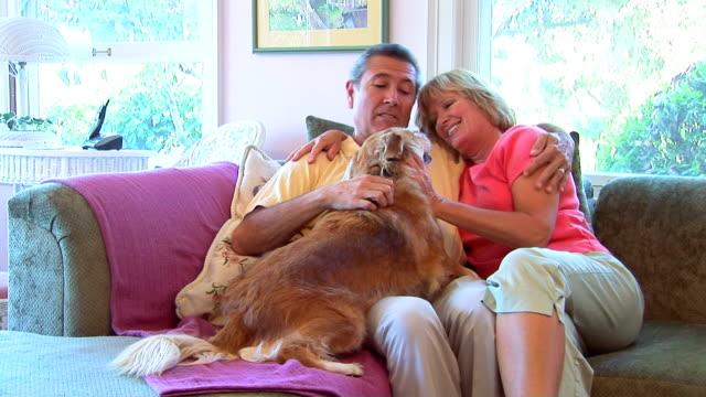 vídeos y material grabado en eventos de stock de mature couple playing with dog - three quarter length