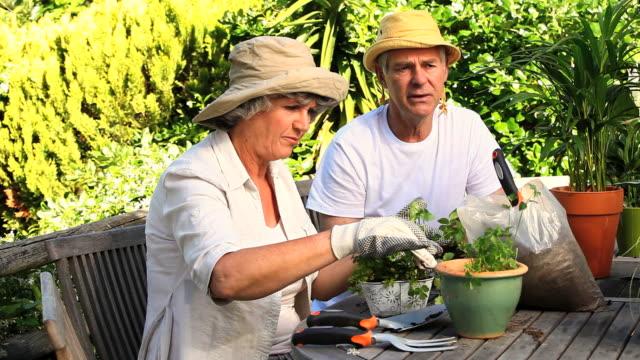 vidéos et rushes de mature couple potting herbs in the garden / cape town, western cape, south africa - gant de jardinage