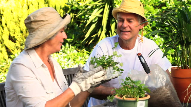 Mature couple potting plants in the garden / Cape Town, Western Cape, South Africa