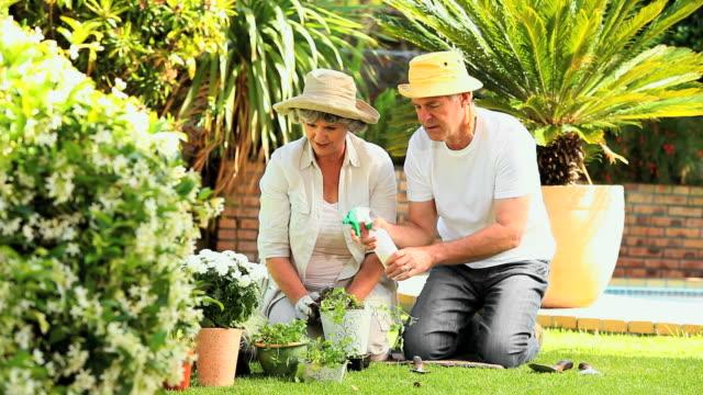 mature couple spraying potted plants in the garden / cape town, western cape, south africa - trädgårdshandske bildbanksvideor och videomaterial från bakom kulisserna