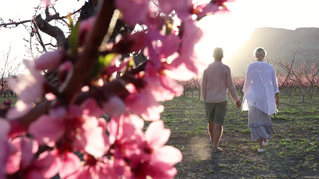 mature couple walk through peach orchard, in springtime - orchard stock videos & royalty-free footage