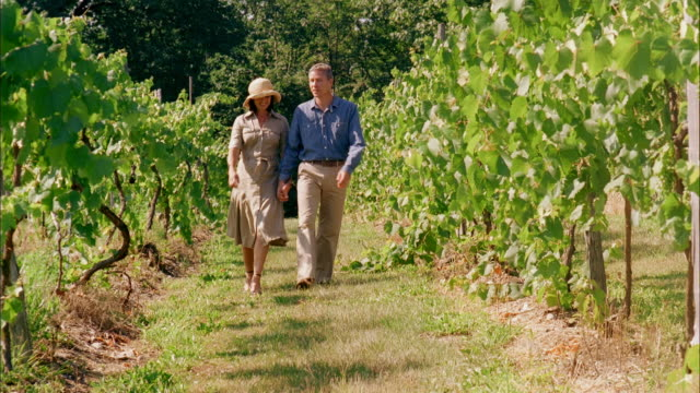 ms, mature couple walking in vineyard, marlboro, new york state, usa, cu - marlboro new york stock videos and b-roll footage