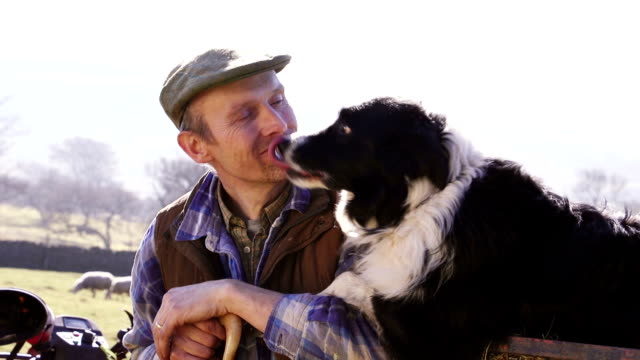 mature farmer and his sheepdog - sheepdog stock videos & royalty-free footage