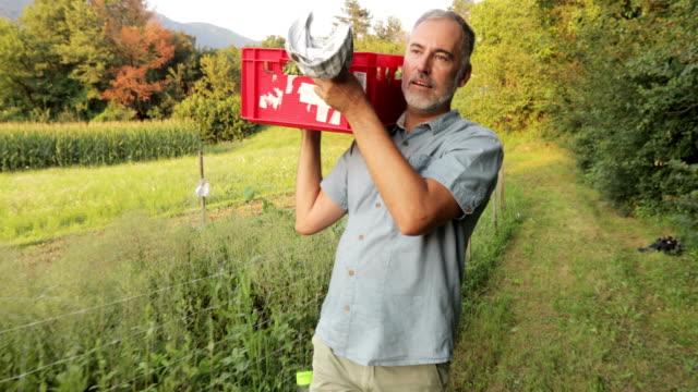 mature farmer carrying basket full of harvested homegrown organic runner bean - runner bean stock videos & royalty-free footage