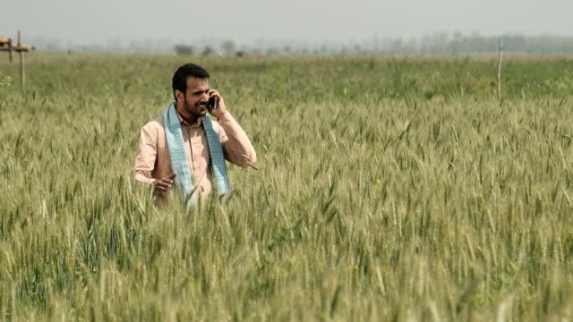 vídeos y material grabado en eventos de stock de ws cs mature farmer talking on phone while standing in wheat field / samalkha, haryana, india - un solo hombre maduro