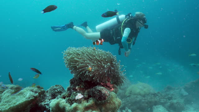 mature female scuba diver on clown fish coral reef thailand - aqualung diving equipment stock videos & royalty-free footage
