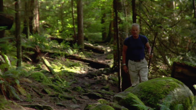 mature man hiking in forest with walking stick - kelly mason videos stock videos & royalty-free footage