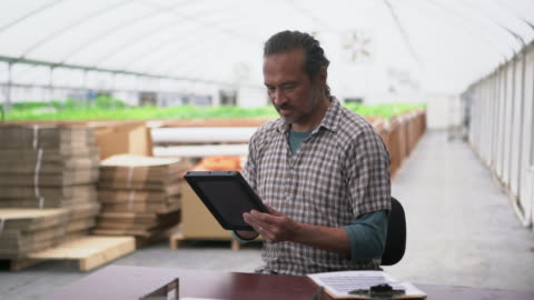 vidéos et rushes de ms mature man looking at a digital tablet in a greenhouse - culture hydroponique