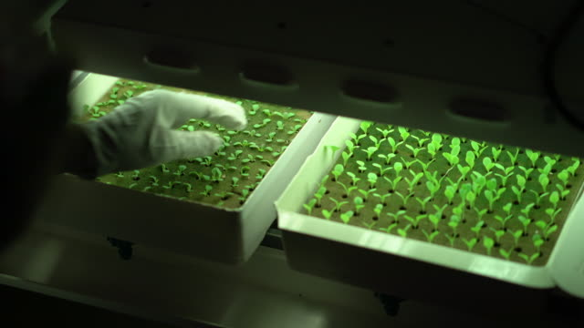 cu rv mature man planting seedlings in grow boxes under lights - biologia video stock e b–roll