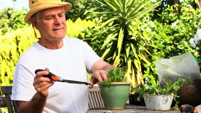mature man potting plants in garden / cape town, western cape, south africa - only mature men stock videos & royalty-free footage