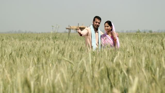 vídeos de stock e filmes b-roll de ws cs mature man showing wheat field to his wife / samalkha, haryana, india - plano de grua
