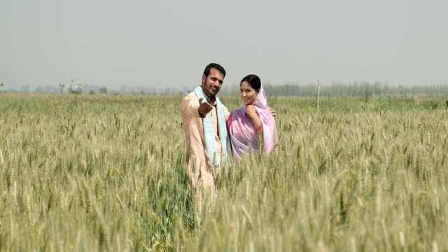 stockvideo's en b-roll-footage met ws cs mature man showing wheat field to his wife / samalkha, haryana, india - driekwartlengte