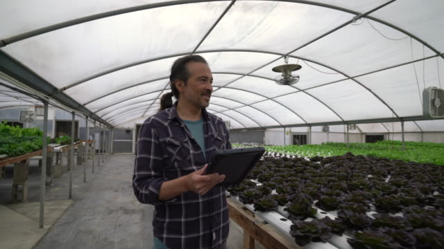 ws mature man using a digital tablet in a hydroponic farm - plaid shirt stock videos & royalty-free footage