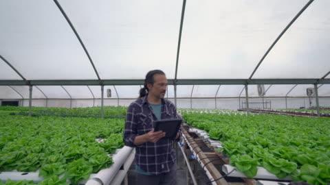 vídeos y material grabado en eventos de stock de ms ts mature man using a digital tablet in a hydroponic farm - cocina estructura de edificio