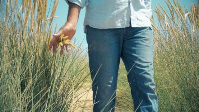 vídeos de stock e filmes b-roll de mature man walking through sand dunes and reeds - erva marinha