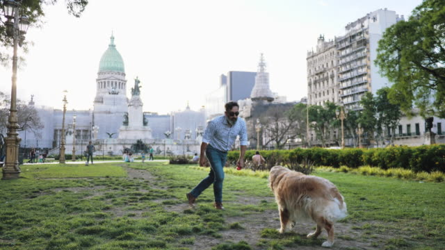 mature man with golden retriever dog walking in the park in sunset - dog walking stock videos & royalty-free footage