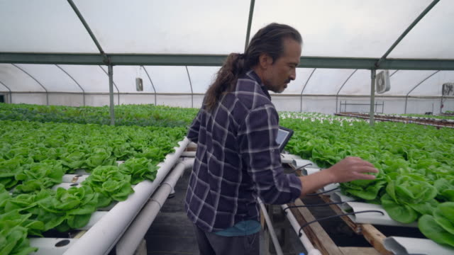 mature man working in a hydroponic farm - hydroponics stock videos & royalty-free footage
