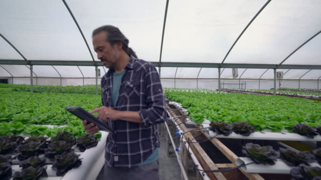 vídeos de stock, filmes e b-roll de mature man working in a hydroponic farm - local de trabalho