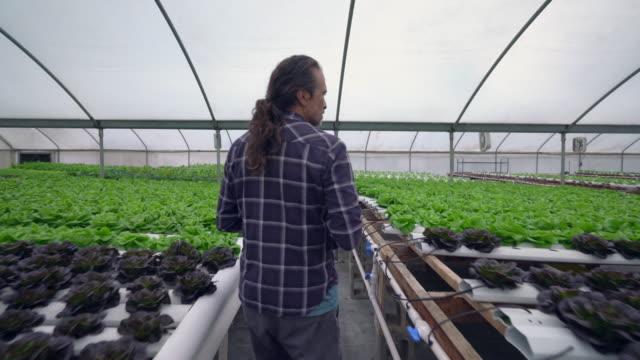 RV TS Mature man working in a hydroponic farm