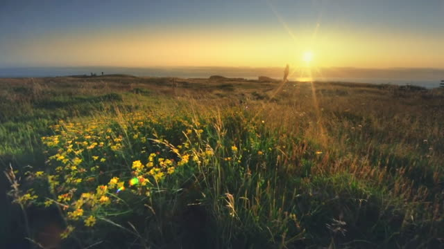 Mature middle aged woman hiking field of wildflowers on Oregon Coast at sunset