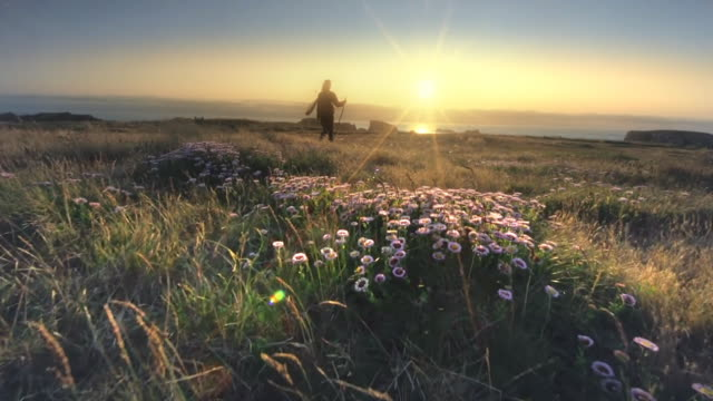 vídeos de stock e filmes b-roll de mature middle aged woman hiking field of wildflowers on oregon coast at sunset - granadilha