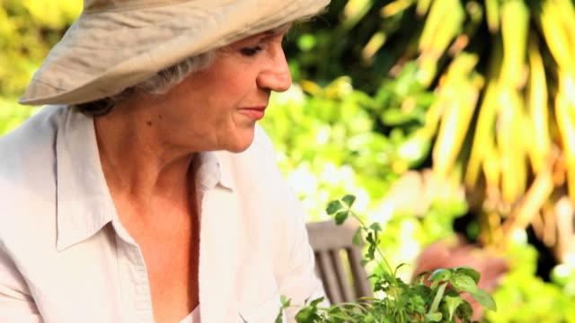 mature woman enjoying tending to her plants / cape town, western cape, south africa - trädgårdshandske bildbanksvideor och videomaterial från bakom kulisserna