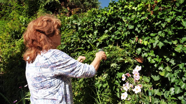 mature woman gardening in the sun - cutting a hedge - secateurs stock videos & royalty-free footage