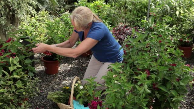 mature woman gardening - pruning shears stock videos & royalty-free footage
