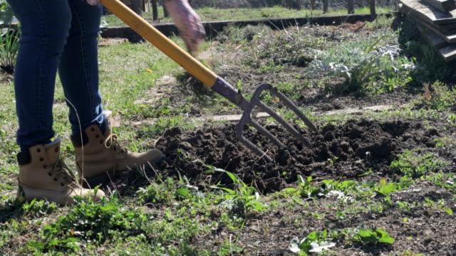 vidéos et rushes de femme mûre jardiner avec la fourchette de jardinage - soil