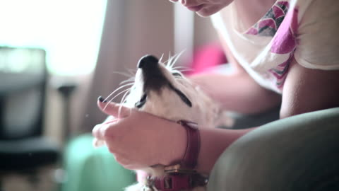 mature woman petting the happy dog - stroking stock videos & royalty-free footage