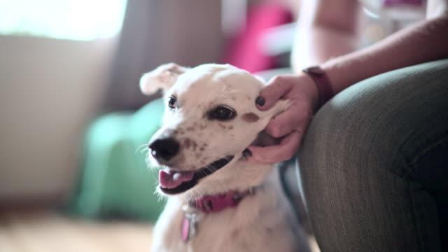 Mogen kvinna klappa den glad hunden