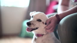 Mature woman petting the happy dog