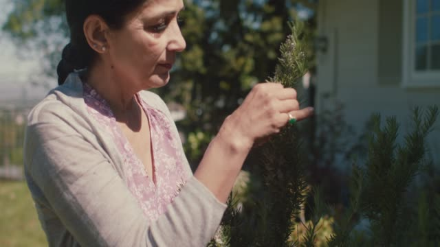 mature woman picking rosemary in her front yard - herb garden stock videos & royalty-free footage